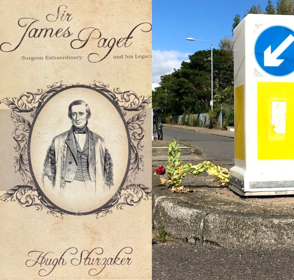 James Paget book and traffic sign pointing to wild rose growing randomly on a traffic island, summer 2020.