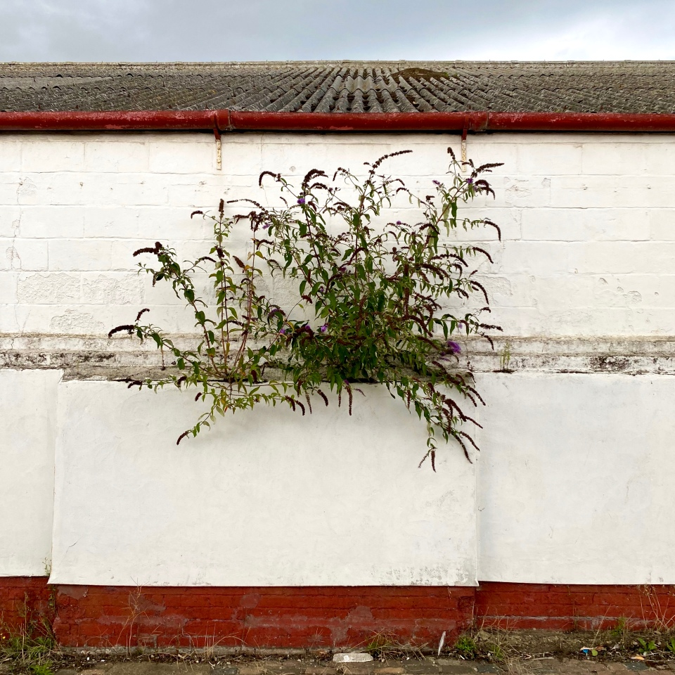 Postcards From Great Yarmouth | Wall Flower 2020